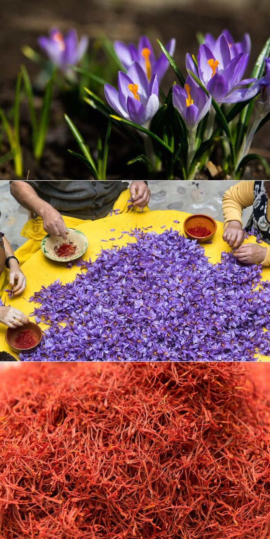 Nhụy hoa nghệ tây (còn gọi là Saffron)