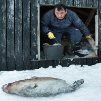 Cuộc sống khắc nghiệt ở vùng đất lạnh giá giáp Bắc Cực