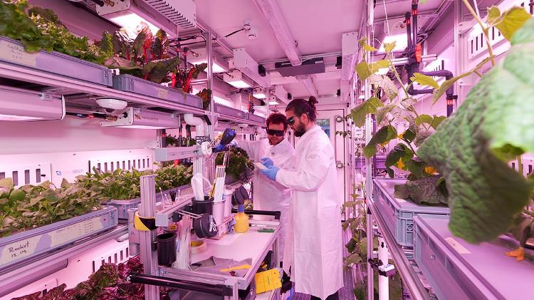 Các nhà khoa học đang tiến hành trồng rau trong trang trại container.