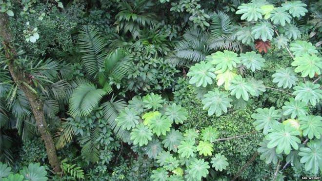 Mỗi loài cây có hình dạng và kích thước lá khác nhau