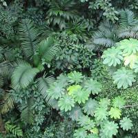 Lý do lá cây có nhiều kích cỡ khác nhau