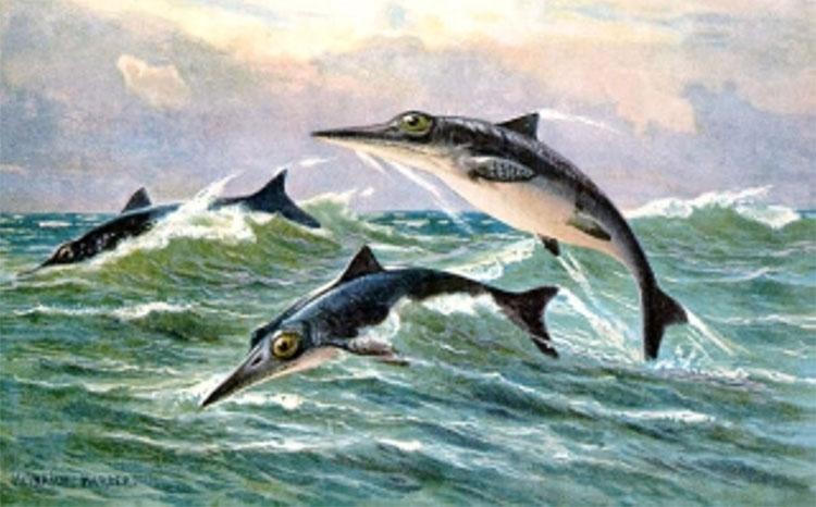 Hình ảnh về loài ngư long