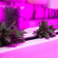 Dự án trồng rau trong container giữa lòng New York của em trai Elon Musk