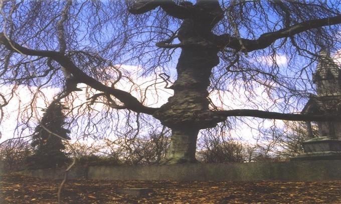 Thân cây trông giống một cây thánh giá khổng lồ đang đứng gác cho nghĩa trang.