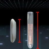 Video: Công dụng của chip hạt gạo siêu nhỏ cấy vào bàn tay