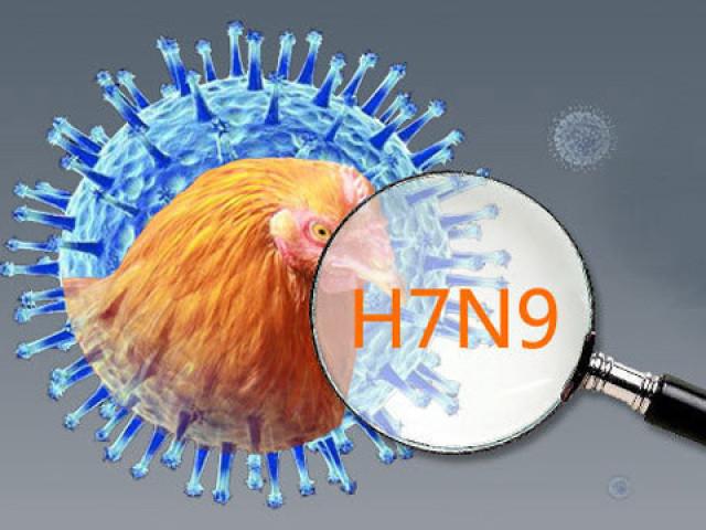 Chủng virus cúm A/H7N9 độc lực cao có thể nhân lên hiệu quả ở trên chuột, chồn và một số loài linh trưởng.
