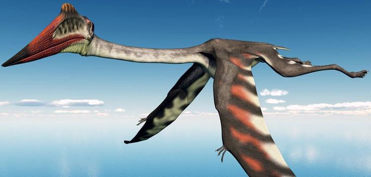 Loài thằn lằn bay có kích thước tương tương một chiếc máy bay nhỏ.