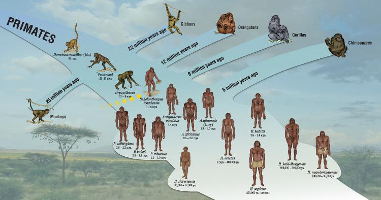 """Một """"mắt xích bị mất"""" là một mắt xích tiến hóa giả thuyết giữa loài khỉ và con người."""