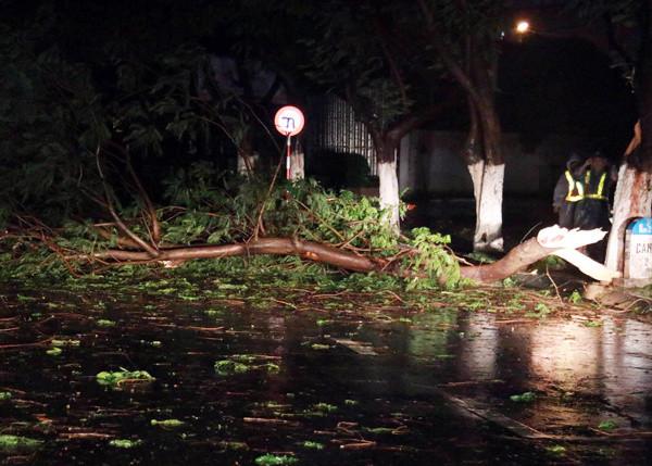 Cây đổ ở Nha Trang.