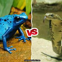 Sự khác nhau giữa nọc độc và độc tố