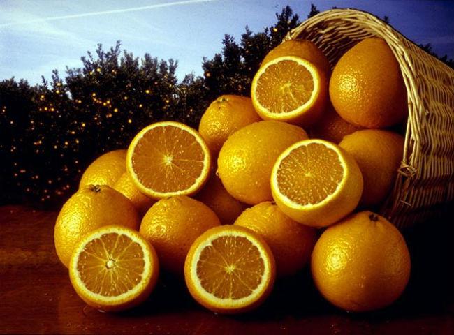 Những trái cam có vai trò quan trọng trong công cuộc khám phá vùng đất mới