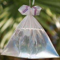 Lý giải khoa học hiện tượng loài ruồi sợ túi bóng nước