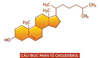Cấu trúc phân tử cholesterol.