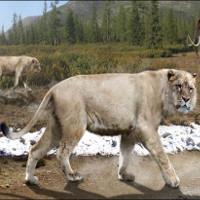 Hồi sinh xác ướp sư tử 50.000 năm tuổi bằng thí nghiệm như trong phim