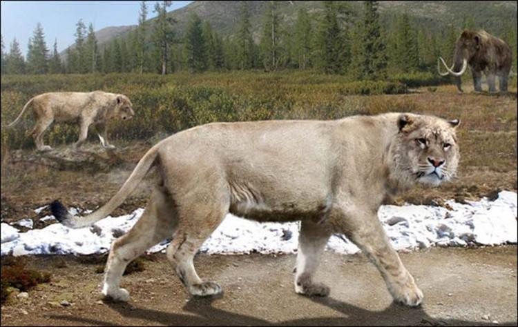 Minh họa sư tử hang.