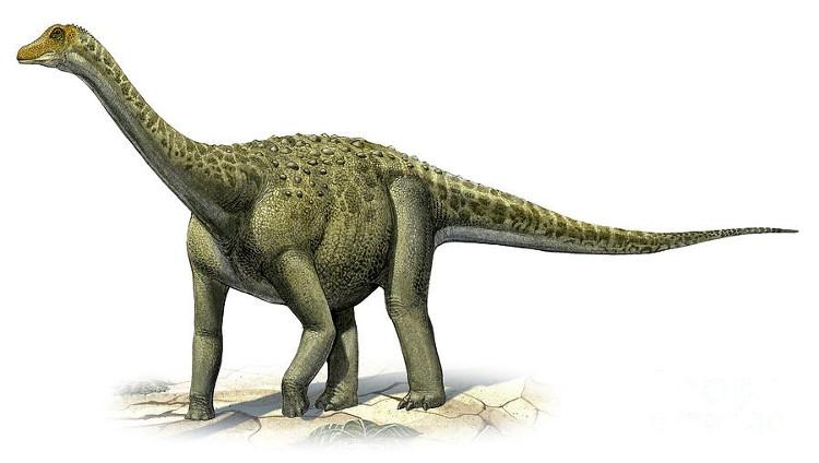 Titanosaurus có thịt có hương vị ngon nhất.
