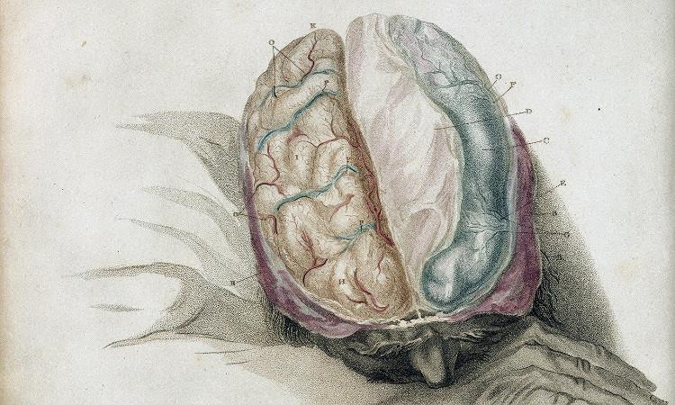 Làm thế nào để một bộ não, bao gồm rất nhiều mô-đun, chỉ tạo ra một con người?