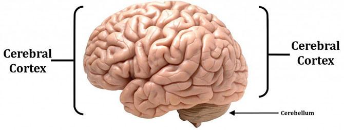Bộ não con người không hoàn toàn giống như một chiếc máy tính.