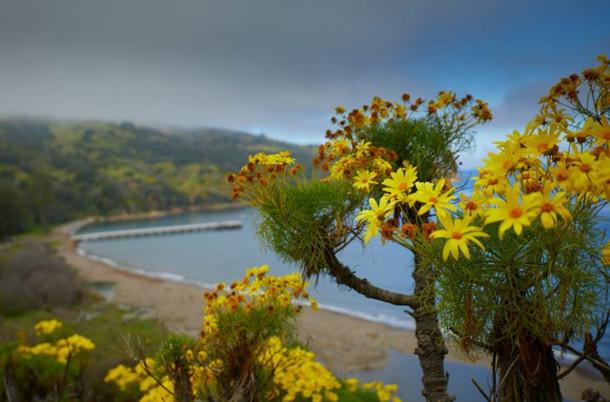 Đảo Santa Cruz với hệ sinh thái đa dạng từng bị đe dọa bởi loài kiến Argentina