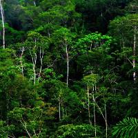 Đây là lá chắn cuối cùng để giảm thiểu ảnh hưởng của biến đổi khí hậu?