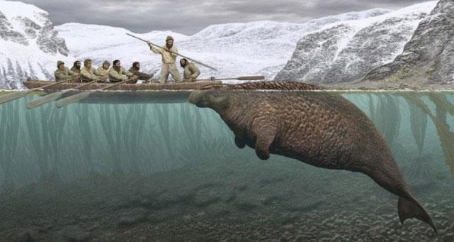 Loài bò biển bị tuyệt chủng 27 năm sau khi được con người phát hiện.