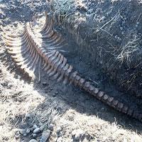 Bộ xương không đầu của quái vật biển dài 6 mét
