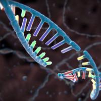 Lần đầu tiên quá trình chỉnh sửa gene CRISPR được quay lại