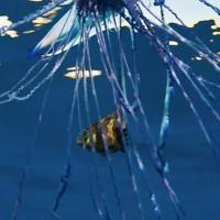 Sinh vật biển kịch độc khiến đoàn quay phim đau đớn tháo chạy