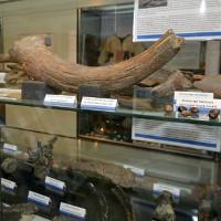 Đi dạo bãi biển, phát hiện cổ vật quý 6.000 năm
