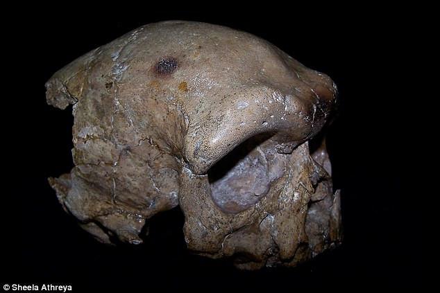 Hộp sọ Đại Lý được xác định niên đại 260.000 năm trước.