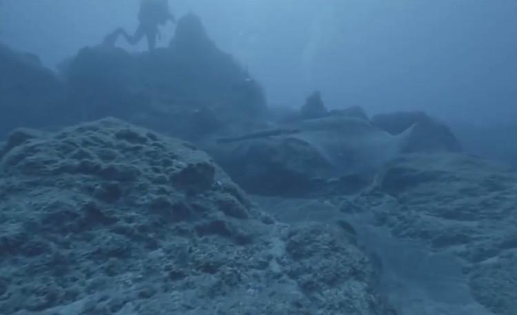 Cá đuối ó khổng lồ.