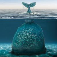 """Phát hiện """"dị vật"""" trong bụng loài sống ở vực sâu nhất Trái đất"""