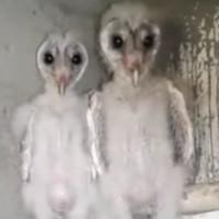 Hoảng hốt phát hiện chim ngoài hành tinh ở Ấn Độ?