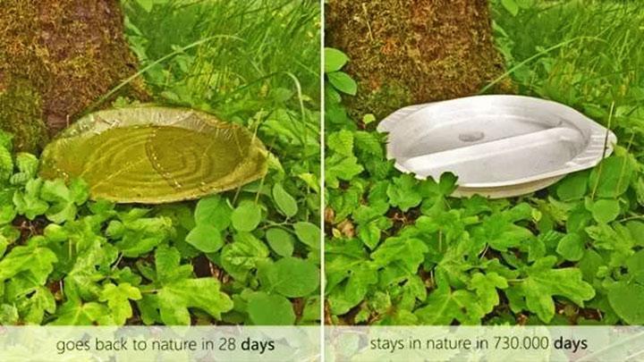 Trong khi đĩa nhựa dùng 1 lần phải mất tới 730.000 ngày mới có thể phân hủy thì đĩa làm từ lá cây chỉ mất 28 ngày.