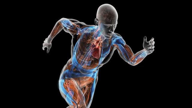 Cơ thể sẽ có cơ chế bảo vệ nhằm duy trì nhiệt độ ổn định trước sự dao động nhiệt của môi trường.