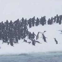 Hàng nghìn chim cánh cụt phi thân lên mặt băng ở Nam Cực