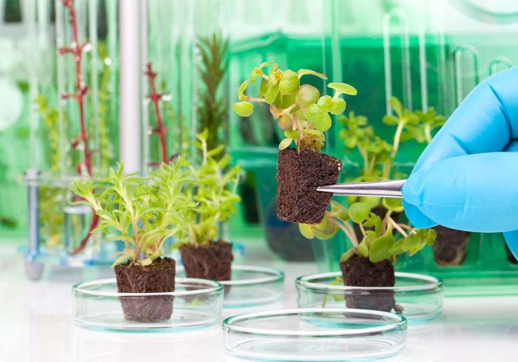 Những cây xanh công nghệ cao được chăm sóc trong phòng thí nghiệm