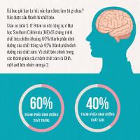 Có bao giờ bạn hỏi não được cấu thành từ chất gì?