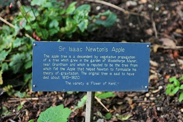 Bảng giới thiệu về cây táo Newton.