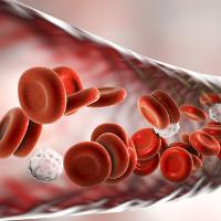 """Tế bào máu của những bệnh nhân ung thư sống sót có hi vọng giúp bệnh nhân khác """"khỏi bệnh"""""""