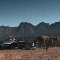 Sinh vật nhanh nhất hành tinh so tài với xe đua công thức