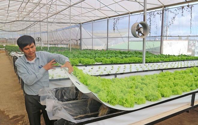 Ông Trần Huy Đường bên trong vườn rau khí canh của trang trại.