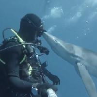 """Thợ lặn giật nảy mình khi bị cá mập """"hôn"""""""