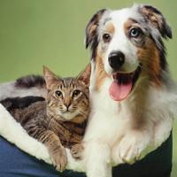 """Nghiên cứu đếm tế bào thần kinh: chó """"thông minh gấp đôi"""" mèo"""