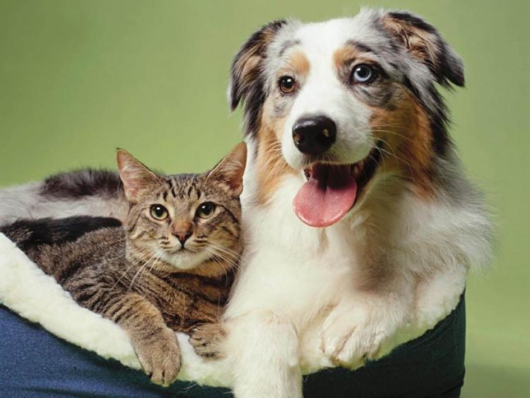 Chó và mèo, loài nào thông minh hơn?
