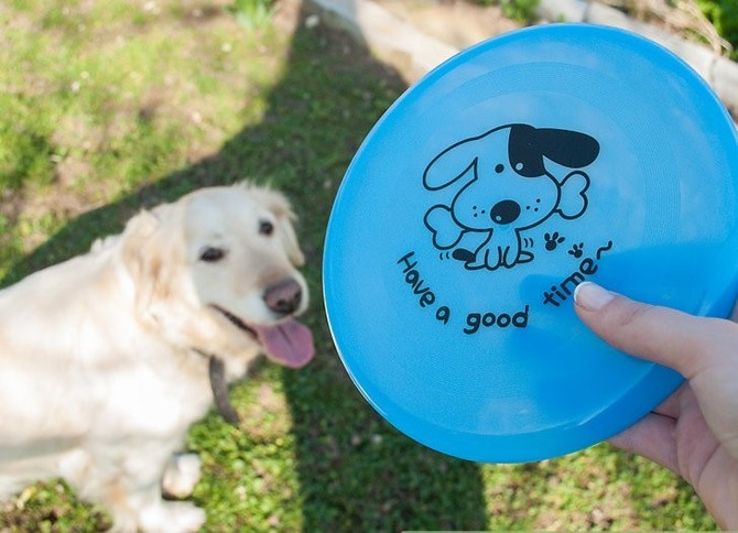 Loài chó được đánh giá là thông minh vì khả năng thực hiện nhiều hành động phức tạp.