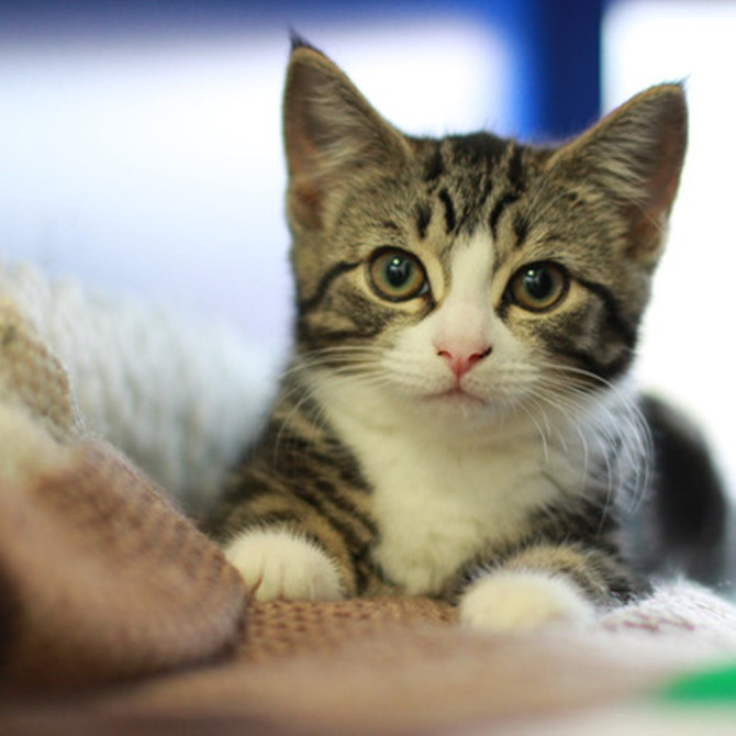 Mèo có khoảng 250 triệu tế bào thần kinh vỏ não.