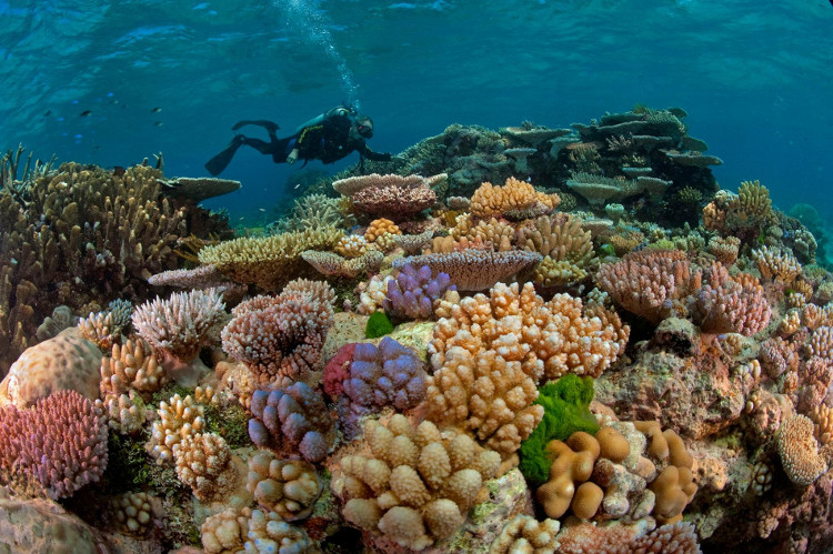 Thực tế san hô là một loài động vật bậc thấp thuộc ngành ruột khoang.