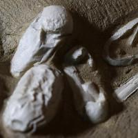 Phát hiện hàng trăm trứng thằn lằn bay 120 triệu năm ở Trung Quốc