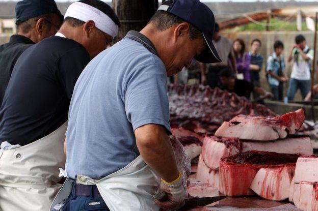 Cảng cá Wada, một trong những nơi bán thịt cá voi nổi tiếng.